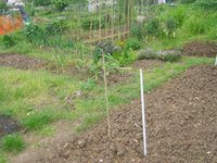 3_allotment_view_165