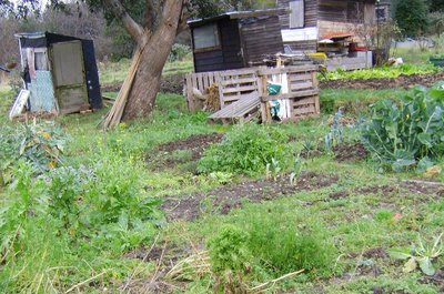 Allotment_12_jan_06_001crop2_1